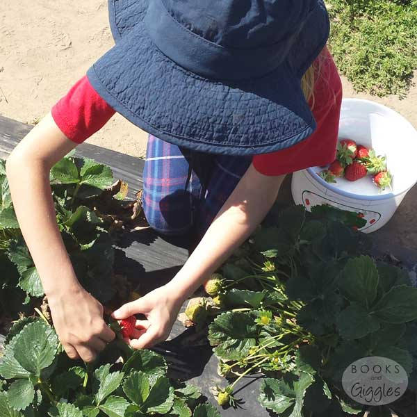 strawberry-picking-kids