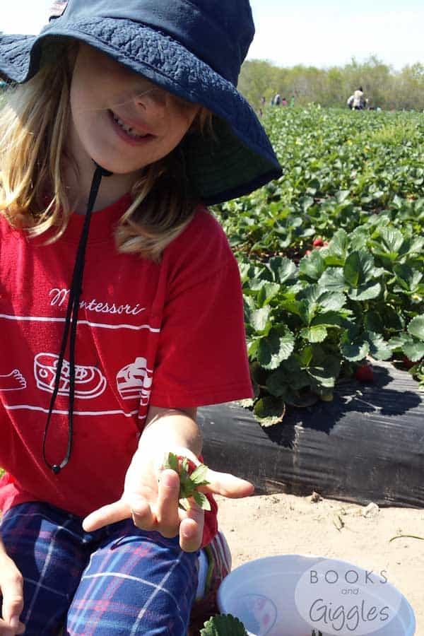 strawberry-picking-sight-words